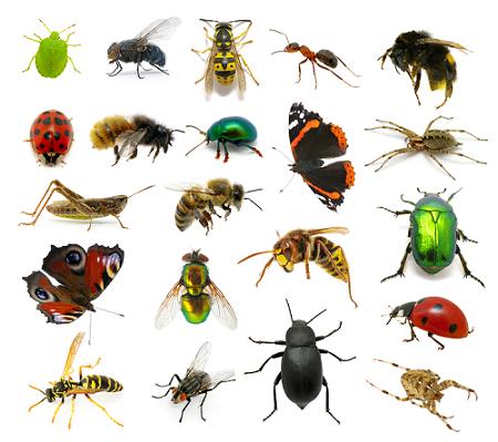 Lợi ích và tác hại của các loài côn trùng