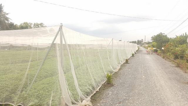 Xu hướng sử dụng cửa lưới chống muỗi